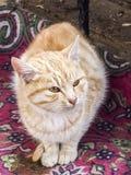 Die schönsten Katzenaugen, nah die Augen der Katzen-, verschiedenen und ursprünglichenkatzenbilder Lizenzfreie Stockfotos