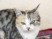 Die schönsten Katzenaugen, nah die Augen der Katzen-, verschiedenen und ursprünglichenkatzenbilder Stockbild
