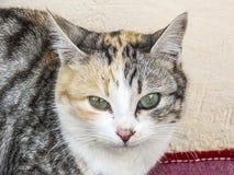 Die schönsten Katzenaugen, nah die Augen der Katzen-, verschiedenen und ursprünglichenkatzenbilder Lizenzfreie Stockbilder