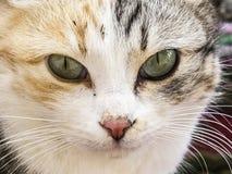 Die schönsten Katzenaugen, nah die Augen der Katzen-, verschiedenen und ursprünglichenkatzenbilder Stockbilder