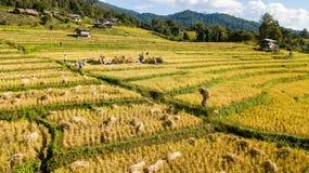 Die schönsten Reisterrassen an wenigem Dörfchen von rollenden Reisterrassen lizenzfreie stockbilder