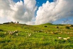 Die Schafe auf der Steppe Stockbilder