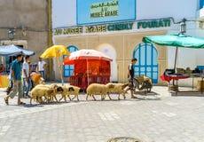 Die Schafe in der alten Stadt Lizenzfreies Stockbild