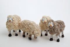 Die Schafe der Krippe Stockfoto