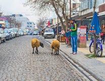 Die Schafe für Verkauf Stockbild