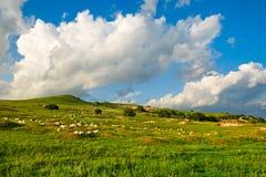 Die Schafe und das cloudscape auf der Steppe Stockfoto
