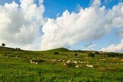 Die Schafe und die Wolken auf der Steppe Lizenzfreies Stockbild