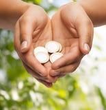 Die schalenförmigen Hände der Frau, die Euromünzen zeigen Stockfoto