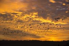 Die Schatten von Vögeln auf dem Hintergrund eines schönen Sonnenuntergangs Lizenzfreies Stockbild