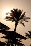 Die Schattenbilder der Palme Stockfotos