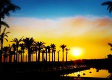 Die Schattenbilder der Palmen Stockfotos