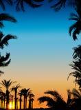 Die Schattenbilder der Palmen Stockfotografie