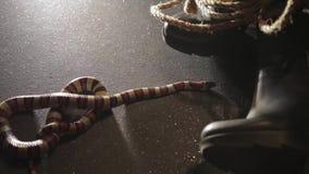 Die Schlange auf dem Boden stock video