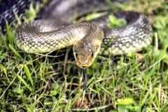 Die Schlange betrachtet mich Stockbild