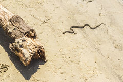 Die Schlange kriecht zum Klotz Stockfotografie