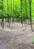 Die Schlucht und die Bäume Lizenzfreies Stockbild