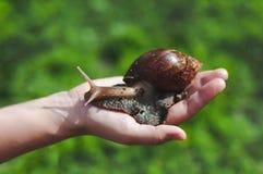 Die Schnecke Achatina auf der Person ` s Hand auf einem Hintergrund des grünen Grases stockbild