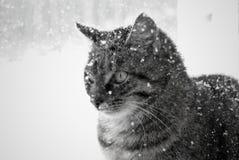 Die Schneekatze Lizenzfreie Stockfotos