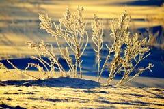 Winter-Skizzieren Lizenzfreie Stockfotografie