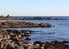 Die schroffen Felsen an Moa-Punkt in Wellington, Neuseeland stockbilder