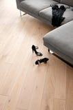 Die Schuhe und die Kleidung der Frauen, die vor einem Sofa liegen Stockfoto