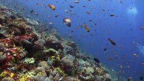 Die Schule von bunten Fischen auf dem Riff im Ozean stock footage