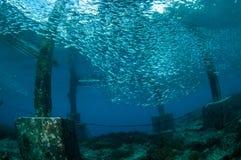 Die Schulung fischt in Gili, Lombok, Nusa Tenggara Barat, Indonesien-Unterwasserfoto Lizenzfreie Stockfotos