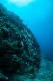 Die Schulung fischt in Meno-Wand, Gili, Lombok, Nusa Tenggara Barat, Indonesien-Unterwasserfoto Stockbild