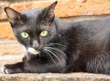 Die schwarze Katze ist auf der alten Backsteinmauer entspannend Stockfoto