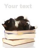 Die schwarze Katze liegt auf Büchern Lizenzfreie Stockfotos