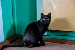 Die schwarze Katze mit gelben Augen lizenzfreie stockbilder