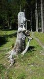 Die Schweiz-Holzkunst Stockfotos
