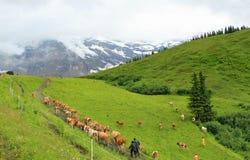 Die Schweiz Landscape03 lizenzfreies stockbild