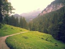 Die Schweiz-Natur 2013 2014 Lizenzfreie Stockfotografie