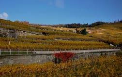 Die Schweiz: UNESCO-Welterbweinyards Lavaux an See-GE lizenzfreie stockbilder
