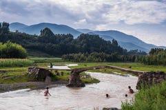 Die Schwimmen, die Jungen in Herden lebt Lizenzfreie Stockfotos