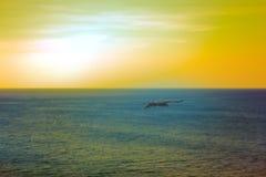 Die Seeadler Drachen über dem Indischen Ozean Stockbild