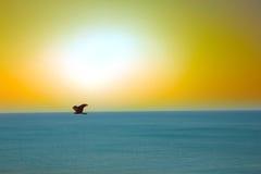 Die Seeadler Drachen über dem Indischen Ozean Lizenzfreies Stockfoto