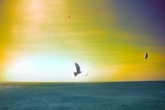 Die Seeadler Drachen über dem Indischen Ozean Lizenzfreie Stockbilder