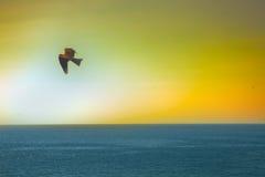 Die Seeadler Drachen über dem Indischen Ozean Stockfoto