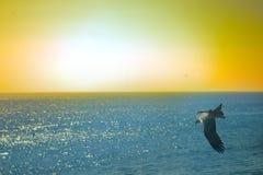 Die Seeadler Drachen über dem Indischen Ozean Stockfotografie