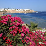 Die Seeansicht und das bougevillea, Sharm el Sheikh, Ägypten Stockfotos