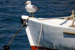Die Seemöwe, die auf einer Wekzeugspritze eines Fischerbootes sitzt Stockfotos