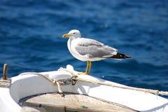Die Seemöwe, die auf einer Wekzeugspritze eines Fischerbootes sitzt Lizenzfreies Stockbild