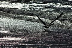 Die Seemöwe, die oben fliegt, holt Hoffnung und Optimismus Geben Sie nie auf Lizenzfreie Stockfotografie
