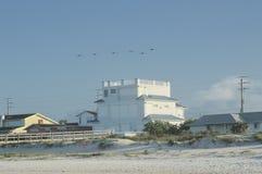 Die Seemöwen, die über ein Strandhaus auf Ponce-Einlass fliegen, setzen in Florida auf den Strand Stockbilder