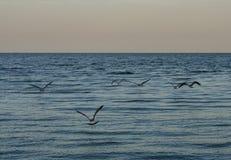 Die Seemöwen fliegt seine Flügel weit gegen den blauen Himmel Angthong Nationalpark stockbilder
