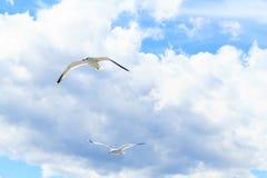 Die Seemöwen im Himmel Stockbilder