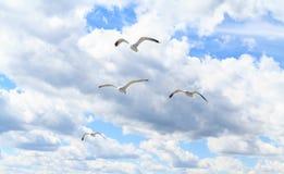 Die Seemöwen im Himmel Stockbild