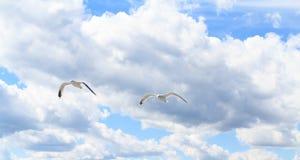 Die Seemöwen im Himmel Lizenzfreie Stockfotografie